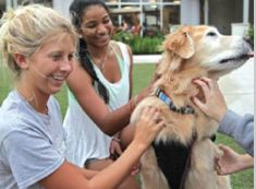Stressed-out student? Get a dog (or cat, rabbit) #HumanAnimalBond