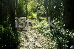 Footpath through Green Forest royalty-free stock photo