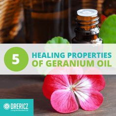 Aromatherapy, of course, extends well beyond floral scents, and the floral oils are more than just a pretty smell. Geranium essential oil uses are no exception, carrying many incredible benefits as well as a floral scent to soften blends or stand on its own. #geranium #essentialoils #aromatherapy #naturalhealth #naturalremedy