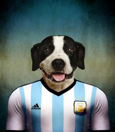 6ea786f97 Dogo argentino wearing the soccer jersey from his nation Argentina