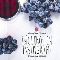 Marqués de Cáceres (@Marques_Caceres) | Twitter