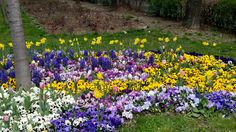 Parc Florilor sect2.Panselute, Lalele,Narcise si Zambile..