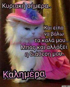 Happy Sunday, Make Me Happy, Good Morning, Thankful, Quotes, Cats, Winter, Beauty, Buen Dia