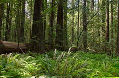 These 15 Hiking Spots In Northern California are Completely Out Of This World