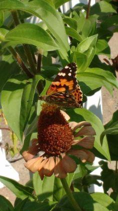 Fruit, Plants, Butterflies, The Fruit, Plant, Planting, Planets