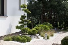 Przedstawiamy ogród, w którym dominują proste formy oraz minimalizm w doborze koloru. W ten krajobraz wdzięcznie wpisały się dalekowschodnie akcenty. Gravel Garden, Garden Plants, Modern Landscaping, Outdoor Plants, Landscape Architecture, Garden Inspiration, Bonsai, Sidewalk, Home And Garden
