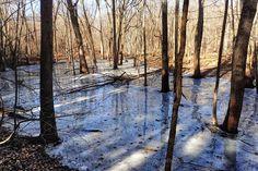 Winter thaw.  #photography #photo #scenic #beautiful #landscape #sunrise #Michigan #puremichigan #outdoors #travel #nature #lake #winter #water #forest #snow #ice #nature #sunlight #trees