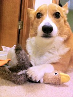 But you said it was MY duck.