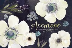 Check out Watercolor ranunculus flower clipart by GrafikBoutique on Creative Market