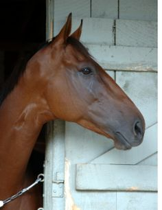 Now we're talking. This is the way to deal with trainers who run drugged racehorses. And we hope to see more arrests and convictions in racing jurisdictions across the U.S. Horse racing itself is c...