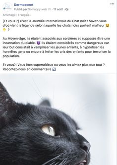 Le Saviez-Vous - Dermoscent Cats, Animals, World Cat Day, International Cat Day, Starry Nights, Calendar, Gatos, Animales, Animaux