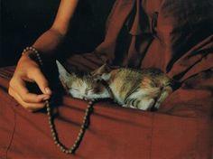 Triste Losar Moine et chat-