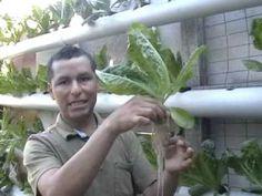 Hidroponia, cultivos sin tierra - YouTube