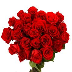 Fresh Valentine's Day Red Roses (75 Extra Long Stems)