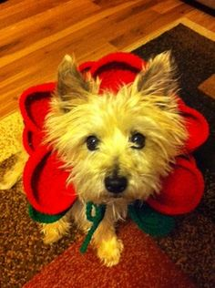 Col. Potter Cairn Rescue Network: Sunday Sweets - Kayla makes a cute Cairn flower!