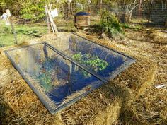 strawbale cold frame. too cool!
