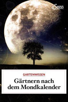 Gärtnern nach dem Mond zahlt sich aus. Denn, wer sich im Garten nach dem Mondrhythmus orientiert, wird mit gesunden Pflanzen und reicher Ernte belohnt. #mondkalender #gärntnernmitdemmond #gartenarbeitnachdemmondkalender #pflanzen #gartenzeit #gartenarbeit #gartenblog #gartengestaltung #natur #gartenfreude #gartenpflege #meingartenreich #naturgarten #gartenideen #gartenidee #servus #servusmagazin #servusinstadtundland Moon, Celestial, Outdoor, Moon Calendar, Plant Parts, Yard Maintenance, Natural Garden, Weed, Garden Plants
