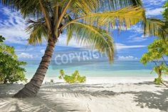 A scene of palm trees and sandy beach in Maldives island
