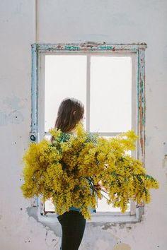 ■開花時期 2月~4月 ■鮮やかなイエローカラーが目を惹くミモザ。海外では春を告げる花としても知られ、女性への感謝の気持ちを込めて、ミモザの花束をプレゼントする習慣もあるそうです。