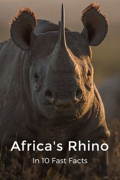 AWF – Schauen Sie sich das Nashorn an! – African Wildlife Foundation – Join in the world of pin Safari Animals, Nature Animals, Animals And Pets, Cute Animals, Wild Animals, Baby Animals, Strange Animals, Vida Animal, Mundo Animal
