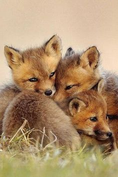Lovely Fox pups sitting close to eachother! Great pic!