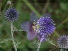 ▶ Nature, fleurs de montagne aux mille couleurs - montain flowers - YouTube