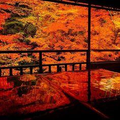 いいね!8,969件、コメント25件 ― Japan Airlinesさん(@japanairlines_jal)のInstagramアカウント: 「Only this time of year . by @hetareclimber #京都 #瑠璃光院 #紅葉 #秋 #旅 #japan #kyoto #autumn…」