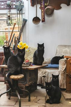 Black cats (photograph by Oskar Proctor)