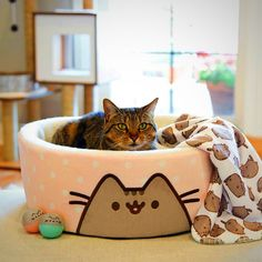 Pusheen cat bed. Looks comfy
