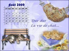 Chat Web, Cat Calendar, Bee, Cats, Animals, Gatos, Animales, Animaux, Bees