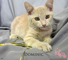 Fluffy and Dominic have been adopted! Congratulations to these two kitties who each came to us in desperate need of refuge and care and are now happy and relaxed in their loving new home. Sleep tight Dominic and Fluffy. We love you so much! Yay for starting the new year at home!
