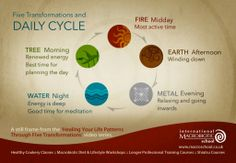 The 5 transformations and the daily cycle