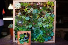 DIY Vertical Garden - How To Plant Projects