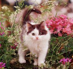 kitty in a spring garden - Cats Wallpaper ID 1715745 - Desktop Nexus Animals