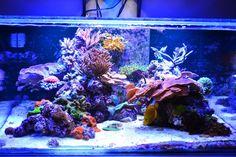 Tips and Tricks on Creating Amazing Aquascapes - Page 31 - Reef Central Online Community Coral Reef Aquarium, Nano Aquarium, Tropical Aquarium, Marine Aquarium, Aquarium Fish Tank, Aquarium Ideas, Cool Fish Tanks, Saltwater Fish Tanks, Saltwater Aquarium