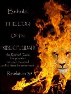 Revelation Tribe of Judah Bible Verses Quotes, Bible Scriptures, Lion Of Judah Jesus, John Bell, Christian Warrior, Padre Celestial, Tribe Of Judah, Jesus Christ Images, Bride Of Christ