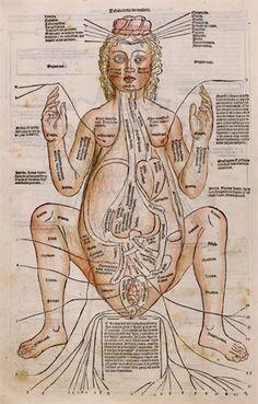 Female Anatomy Early Pregnancy