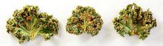 """De Boerenkool Chips zijn weer op voorraad!  Steeds vers gemaakt van de beste biologische ingrediënten en gedurende het hele proces niet verwarmd boven de 38 tot 40 graden Celsius. Een biologisch """"raw food"""" product.  Met keuze uit Fusion, Tickling Thai, Sweet Curry en Old Favorite: https://www.hempishop.nl/superfoods-biologisch/boerenkool-chips  #rawfood #superfood #boerenkool #boerenkoolchips #KoolOrganics #kale #kalechips"""