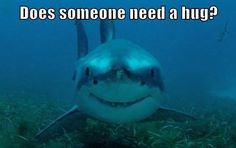 11 Funny Shark Memes To Celebrate Shark Week