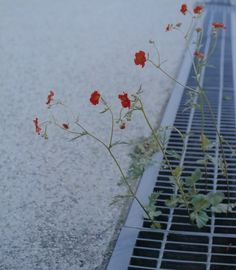 Rinko Kawauchi - Every Day As A Child// Nodding against the wall, the flowers Sneeze// Jack Kerouac