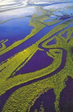 Amazon Rain Forest, Brazil