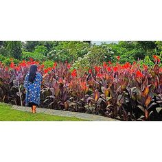 Thank you Ibu @trirismaharini you made Surabaya as beautiful city with the flowers 🌺🍀 . . . #me #park #garden #surabaya #flower #flowers #beauty #beautiful #travel #travelphotography #photooftheday #photography #photooftheday #picoftheday #travelhistory #travelgram #landscape #instadaily #instanusantara #wonderfulindonesia #instagood #nature #tagsforlikes #exploresurabaya by baliestmavie. landscape #travelgram #park #instagood #travelhistory #photography #travel #wonderfulindonesia…