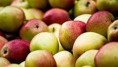 Picking apples: Everything you need to know. Now's the time to get to a local apple orchard and pick out some delicious fruit for pies, applesauce and eating pl