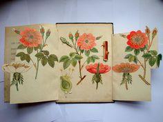 Vintage botanical pop-up book