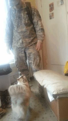 OH DADDY! | Community Post: Cat Jumps For Joy Over Soldier's Homecoming. Precious!