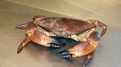 Local Crab #fishmonger #fish #coldwaterfish #haddock #cod #mackerel #turbot #tuna #grouper #bream #shellfish #exoticfish #crab #lobster #mussels #trout #scallops #razorclams #shrimp #shark #salmon #salmón #wildsmokedsalmon #smoked #stockbridge #edinburgh #scotland