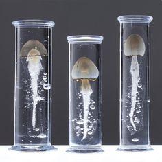 Steffen Dam's glass sculpture