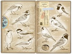 another interesting way to collect personal bird sketches...