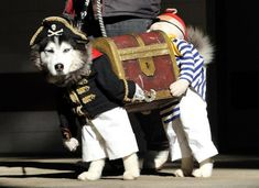 Amazing Dog Costume: Two Pirates Carrying Treasure (pic)