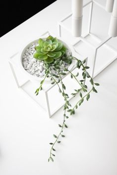 Small plants in Kubus bowl (By Lassen). Small Plants, Green Plants, Air Plants, Potted Plants, Indoor Plants, Planting Succulents, Planting Flowers, Deco Floral, Cactus Y Suculentas